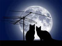 коты и антенна