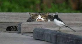 кот и сорока