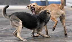 агресс собаки